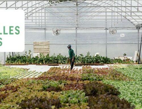 Les Nouvelles Fermes lève 2M€ avec l'appui d'ADI N-A, pour bâtir l'une des plus grandes fermes aquaponiques d'Europe à Bordeaux !